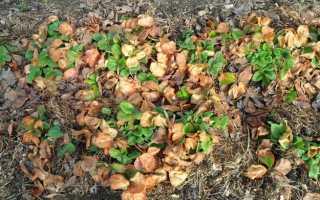 Чем подкормить клубнику: советы по правильному уходу за ягодой в весенний, летний и осенний периоды