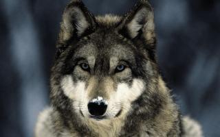 Волчанка – что это за болезнь, симптомы, причины и лечение болезни