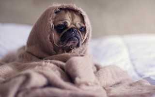 Как определить признаки глистов у собаки