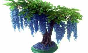 Глициния из бисера: лучшие пошаговые мастер-классы по плетению дерева