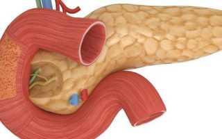 УЗИ брюшной полости: что делать перед процедурой, что включает исследование пациента, расшифровка заключения и цена обследования