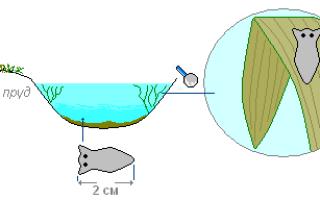 Планария – особенности строения и жизнедеятельности пресноводного паразита, методы борьбы с ним