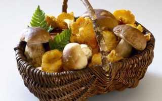 Признаки отравления грибами – через сколько они наступают, проявление симптомов