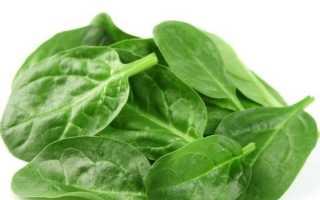 Шпинат – что это такое и разновидности растения, польза и вред, рецепты приготовления с фото
