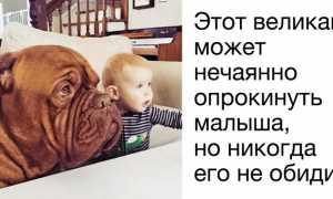 Породы маленьких собак, которые будут лучшими компаньонами