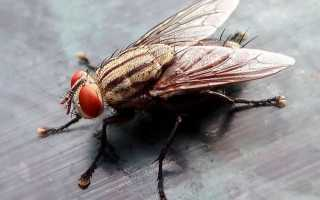 Как избавиться от мух в квартире – эффективные средства борьбы для обработки домашних помещений