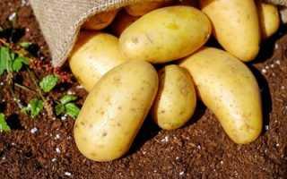Можно ли картошку при диете – польза и вред, рецепты и меню для похудения