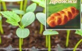 Чем подкормить огурцы после высадки в грунт – полив рассады после посадки