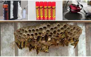 Как избавиться от осиного гнезда на даче – химические методы, ловушки