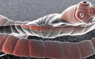 Ленточные черви у человека – пути заражения и симптомы, лечение препаратами и профилактика