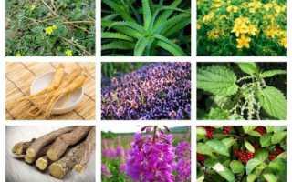 Народное средство для потенции в домашних условиях – эффективные способы, препараты и травяные сборы