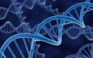 Что такое ДНК: состав, виды, строение молекулы
