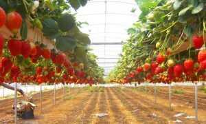 Теплица для клубники – как правильно построить своими руками для выращивания круглый год