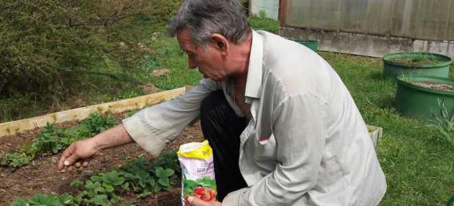 Чем подкормить клубнику во время цветения весной и какие микроэлементы необходимы для удобрения