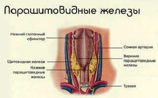 Что такое паратгормон – роль в организме человека, признаки повышения или снижения, методы терапии