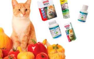 Витамины для старых кошек – обзор лучших препаратов с описанием