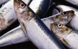 Черви в селедке – опасны ли для человека и виды паразитов