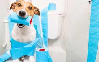 Самые эффективные препараты для собак при диарее