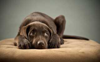 Как понять, что у собаки стресс