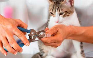 Сколько когтей у кошки на лапах, сколько стоит удалить или подстричь