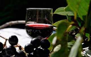 Домашнее вино из черноплодки – черноплодной рябины