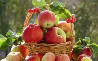Пюре из яблок: как приготовить в домашних условиях