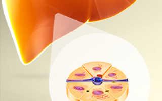Восстановление клеток печени – эффективное лечение для регенерации и работы органа