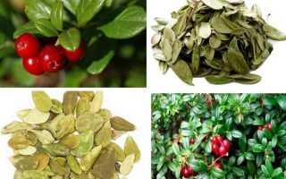Как правильно заваривать листья брусники для чая или настоя – полезные свойства