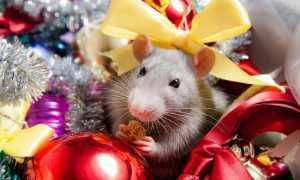Цвет новогоднего наряда в год Белой Металлической Крысы