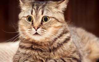 В каком возрасте кастрируют котов: оптимальный возраст для кастрации кота