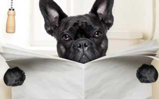 Лоток для собак или щенков в квартиру – как выбрать в зависимости от наполнителя, размера и пола питомца