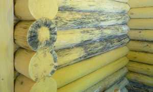 Чем вывести грибок в бане с деревянных стен и пола – химические и народные средства