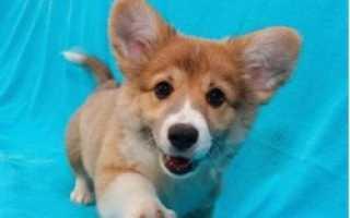 Рейтинг лучших пород собак, подходящих для содержания в квартире