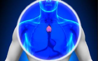 Вилочковая железа – тимус у детей и взрослых