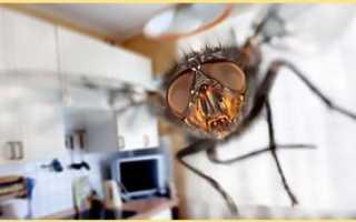 Народные средства от мух – как вывести насекомых в помещении или на участке