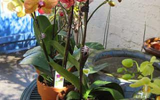 Когда пересаживать орхидею в горшок: пошаговая инструкция ухода за растением, фото и видео