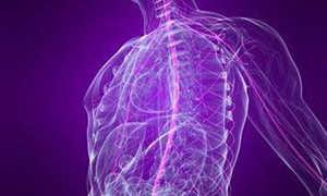 Парасимпатическая нервная система – за что отвечает, нервы и центры, механизм действия и болезни