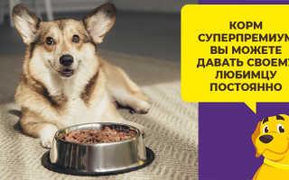 Нормы кормления собак сухим кормом – суточная дозировка по калорийности и бренду, режим питания