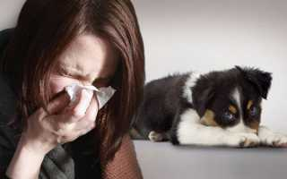 Гипоаллергенные собаки – какое животное завести, список и названия пород с фото
