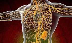 Лимфатическая система – анатомия, схема движения лимфы, диагностика болезней и лечение